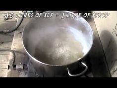 How to Make Maple Syrup video