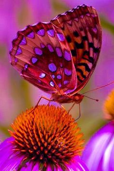 us with what is most beaultiful, simplicity of heart ❤️ Most Beautiful Butterfly, Beautiful Bugs, Animals Beautiful, Beautiful Flowers, Butterfly Kisses, Butterfly Flowers, Butterfly Wings, Butterfly Painting, Butterfly Wallpaper