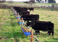 Pautas para optimizar el uso de suplementos Uno de los principales puntos críticos de los sistemas de producción de carne en Argentina es la baja eficiencia de utilización del forraje. Si bien se han desarrollado numerosos estudios a nivel nacional e