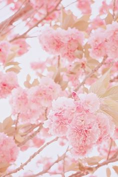 183 Best Pastel Pink Images Pink Color Beautiful Flowers Colors