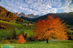 The Symbol of South Tyrol
