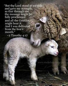 2 Timothy 4:3-5 - Google Search