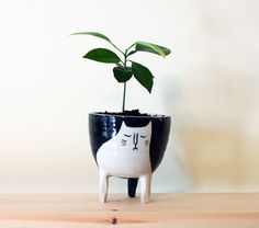 love this crazy little cat planter by #beardbangs