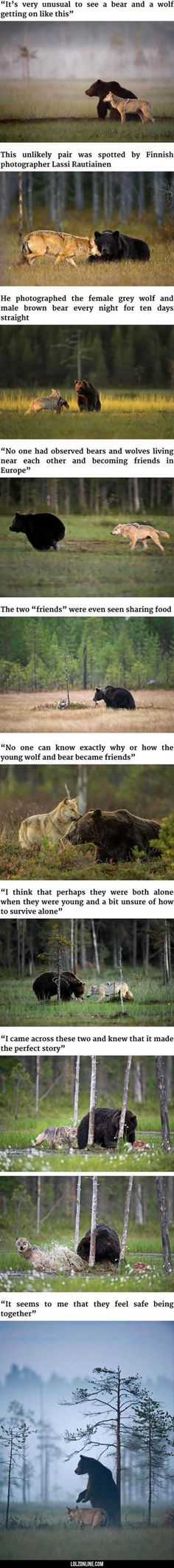 Awesome (if a friggin wolf and bear and be friends can't humans be friends with humans?!)#funny #lol #lolzonline