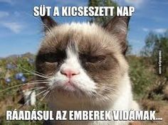 Trendy Ideas For Funny Memes Hilarious Sarcasm Grumpy Cat