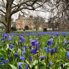 Noch ist es ziemlich kalt aber wir haben die ersten Boten des Frühlings bereits gesichtet   #Frühling #visitbawu #visitkarlsruhe #karlsruhe #travel #travelblog #placetobw #bwjetzt #visitgermany #germanytourism #flowers #spring #flowergram #violet #amazing #cold #colourful #picture #picoftheday #love