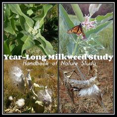 Handbook of Nature Study: Year-Long Milkweed Study - Complete!