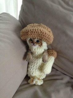Funny pictures about A Kitten In A Crocheted Mushroom Costume. Oh, and cool pics about A Kitten In A Crocheted Mushroom Costume. Also, A Kitten In A Crocheted Mushroom Costume photos. Cute Little Animals, Cute Funny Animals, I Love Cats, Cool Cats, Crazy Cats, Cat Aesthetic, Cat Hat, Cat Costumes, Halloween Costumes