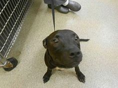 Pet Not FoundFort Myers, FL - Labrador Retriever Mix. Meet AVA, a dog for adoption. www.adoptapet.com...