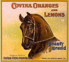 Covina Los Angeles County Beauty Horse Orange Citrus Fruit Crate Label Art Print