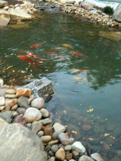 Looking for a Pond Cleaning and Fish Care Professional - We have a 1,200 gallon pond ... #ReferLocal