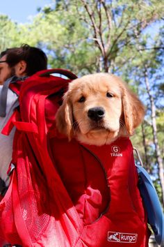 Is there really anything better than a Golden in an G-Train backpack? Wrong answers only. Dog Backpack, Hiking Dogs, Commute To Work, Water Bottle Holders, Ipad Sleeve, Pet Travel, Dog Carrier, Pet Carriers, Day Hike
