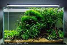 Beautiful scape ------------------------------------------------ #aquascape #aquarium #aqua #aquascaping #wood #grass #tetra #fish #fishtank #tropical #tropicalfish #iwagumi #scenery #water #fresh #aquariumsofinstagram #aquaria #beautiful #awesome #plants #aquariums #instafish #naturalaquariums #beautiful #aquariumsdaily #design #ADA