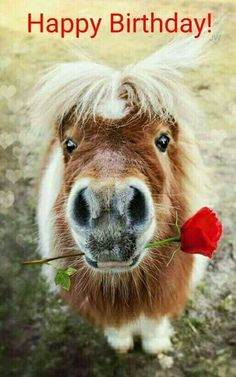 Pferd Alles Gute Zum Geburtstag Kerstin Geburtstag Bilder