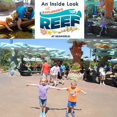 An Inside Look at Explorer's Reef at SeaWorld San Diego