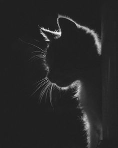Things that make you go AWW! A place for really cute pictures and videos! Cute Cats, Funny Cats, Black Paper Drawing, Photo Chat, Cat Photography, Photography Aesthetic, Cat Wallpaper, Tier Fotos, White Art