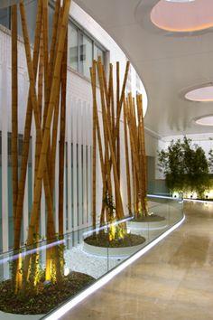 Jardín en acceso a edificio institucional en colaboracion con estudio b76. bambu guadua 6m de altura