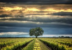 Near Lodi, California