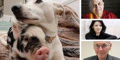 23 personnalités demandent la création d'un secrétariat d'État à la condition animale
