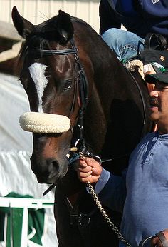 Rachel, Rags and Zenyatta;  the power of the X  Part 1 of an excelkent 3 part article on their genetics.