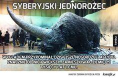 Elasmotherium or the Siberian Unicorn is an extinct genus of giant rhinoceros endemic to Eurasia during the Late Pliocene through the Pleistocene era. sibiricum was the size of a. Dinosaur Fossils, Extinct Animals, Art Sculpture, Prehistoric Creatures, Rhinoceros, Stuffed Animals, Mammals, Creepy, History