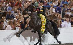 Trump suspende regulamento que proíbe tortura de cavalos