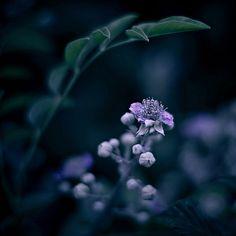 Flor entre sombras
