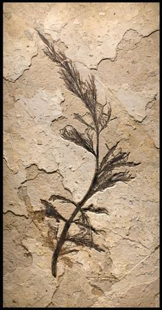 FOSSIL PALM FLOWER - The Curator's Eye  | In China? try www.importedFun.com for Award Winning Kid's Science |