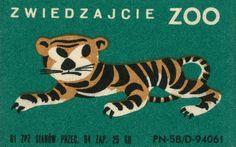 Zoo. Tiger