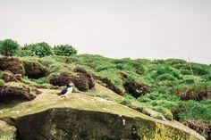 macareux Islande blog voyage lovelivetravel