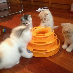 Creative Pet Cat Toy Kitty Lnteractive Training Amusement Plate Three Layer Balls Kitten Tower of Tracks Kittens Playing, Cats And Kittens, Matou, Photo Chat, Interactive Toys, Cat Toys, Games To Play, Your Pet, Kitty