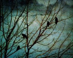 birds and trees....the beginning of a theme here...