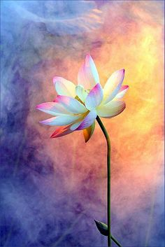 Картина Идеи Спокойный Цветок лотоса (21)