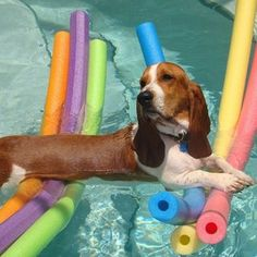 Basset Hound Just chillin' Animals And Pets, Funny Animals, Cute Animals, Animal Memes, Baby Dogs, Dogs And Puppies, Doggies, Hush Puppies, Chien Basset