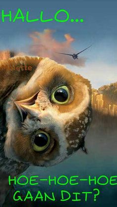 Legend of the Guardians: The Owls of Ga'Hoole. I love owls. They are such beautiful creatures. Griffin and I dissected a Owl pellet. cool as beans. Beautiful Owl, Animals Beautiful, Pretty Animals, Owl Bird, Pet Birds, Animals And Pets, Funny Animals, Cute Animals Images, Funny Owls