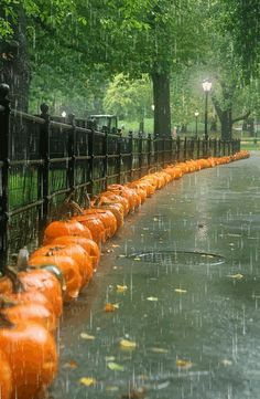 A sidewalk lined with jack 'o lanterns lit by old fashioned street lights softly glowing in the rain. How perfect is that?
