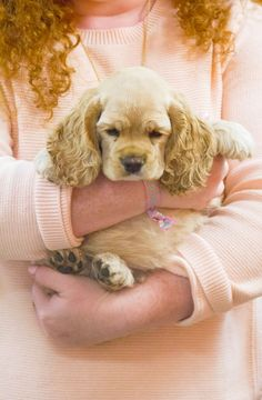 awesome There& nothing like the warmth of a sweet puppy! American Cocker Spaniel, Cocker Spaniel Puppies, Cute Puppies, Cute Dogs, Dogs And Puppies, Animals And Pets, Baby Animals, Cute Animals, Cockerspaniel