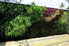 http://fourscape.com/green-wall-vertical-green-wall-india-delhi/