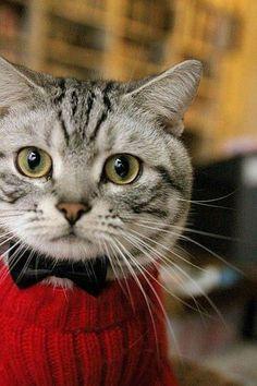 Já é sabido que gosto muito de animais e tenho duas gatas. Quando encontro fotos tão fofas como estas não resisto em partilhar no blog. A...