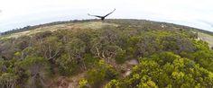 """Quem """"conduz"""" um drone deve evitar territórios de aves de rapina, porque estes animais podem ver os drones como ameaças. Foi isso que aconteceu neste caso, quando uma águia decidiu que não havia espaço para os …"""
