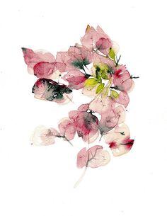julia lillo