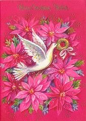 Dove on pink poinsettia background