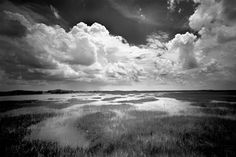 Clyde Butcher.  Black and White Photographer, Everglades.