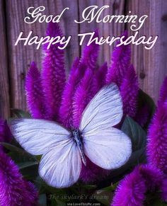 Beautiful Good Morning Happy Thursday Quote