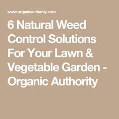 6 Natural Weed Control Solutions For Your Lawn & Vegetable Garden - Organic Authority