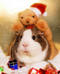 30 Cute Animals Dressed For Christmas | Cutest Paw