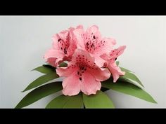 ABC TV | How To Make Azalea Paper Flower From Crepe Paper - Craft Tutorial