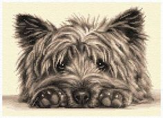 Cairn Terrier Dog Complete Counted Cross Stitch Kit | eBay