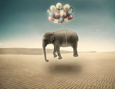 Creative Surreal Photo Manipulations