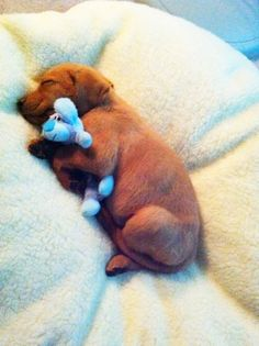 Sleep little baby... snuggle and sleep. #puppies
